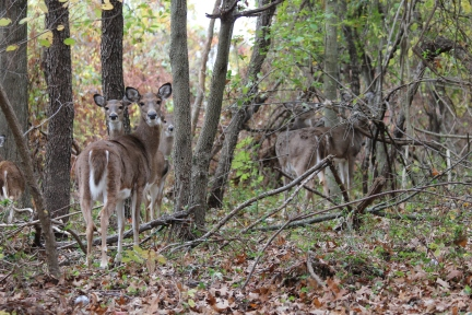 Deer photo (1)